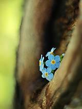 Fotografie - Čaro kvetu - 15. - 9302295_
