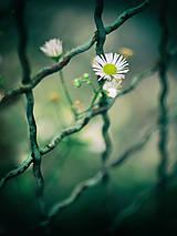 Fotografie - Čaro kvetu - 21. - 9302492_