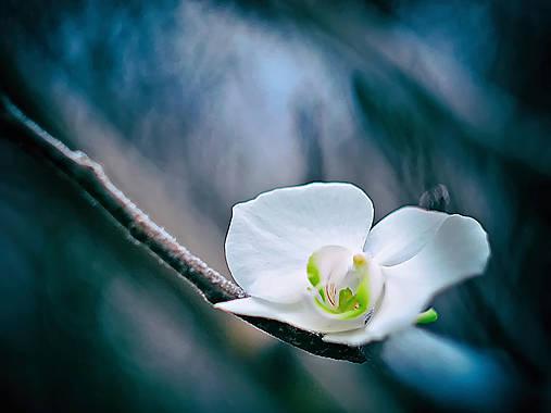 Čaro kvetu - 17.