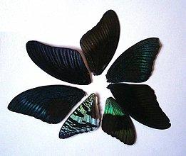 Iný materiál - 2. Set motýlich krídel - 7 ks (nízka kvalita, trošku ošúchané, nalomené) - 9344682_