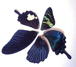Iný materiál - 3. Set motýlich krídel - 5 ks (nízka kvalita, trošku ošúchané, nalomené) - 9344690_