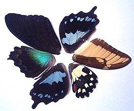 Iný materiál - 4. Set motýlich krídel - 5 ks (nízka kvalita, trošku ošúchané, nalomené) - 9344699_