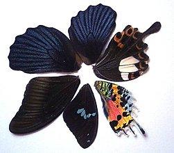 Iný materiál - 5. Set motýlich krídel - 5 ks (nízka kvalita, trošku ošúchané, nalomené) - 9344707_