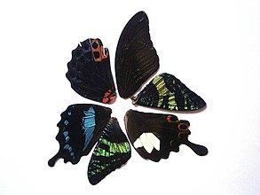 Iný materiál - 6. Set motýlich krídel - 5 ks (nízka kvalita, trošku ošúchané, nalomené) - 9344717_