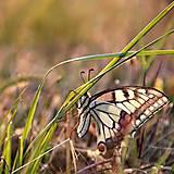 Fotografie - motýlik - 9352510_