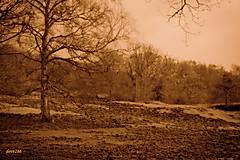 Fotografie - Forest of Dean - 9366762_
