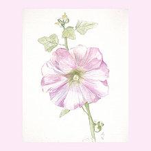 Obrazy - Slézová růže - originál, akvarel - 9375049_