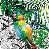 - papagáj - 9408883_