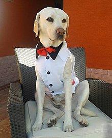 Pre zvieratká - Svadobná vestička pre psíka - 9413649_