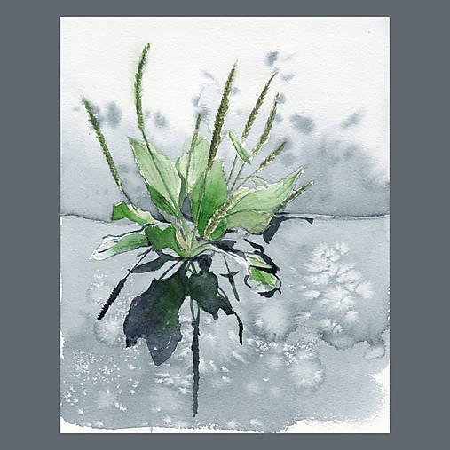 Obrazy - Jitrocel - originál, akvarel - 9421045_