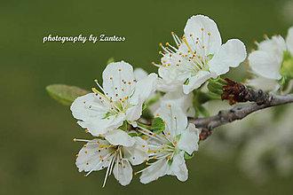 Fotografie - Autorská fotografia: Nežná jar - 9426842_