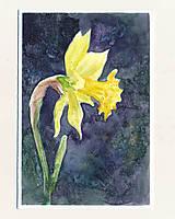 Papiernictvo - Ručne maľovaná pohľadnica - Narcis na tmavom pozadí - 9427705_