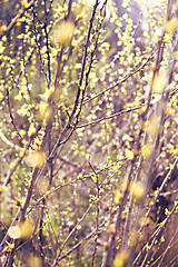 Fotografie - v lúčoch slnka - 9458471_