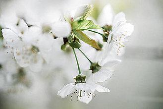 Obrazy - Čerešňa_II - 9456286_