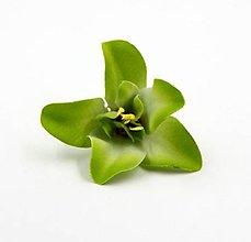 Polotovary - 53. Orchidea - 1 ks - 9459240_