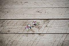 """Náušnice - Kvetinové náušnice """"láskou omámená"""" - 9461316_"""