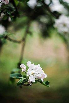 Obrazy - Kvety broskyne_III - 9480613_