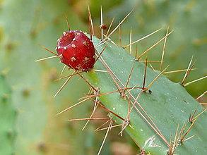 Fotografie - Kaktus - 9484030_