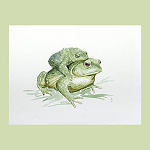 Obrazy - Ropuchy - originál, akvarel - 9493045_