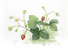 Obrazy - Jahodí (studie) - originál, akvarel - 9499756_