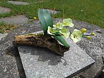 Samorast s orchideou