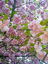Fotografie - foto sakura - 9529762_