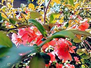 Fotografie - foto - kvety stromu - 9529695_