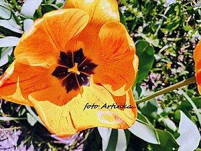 Fotografie - foto tulipán - 9529726_