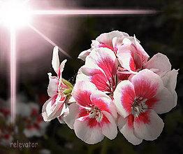 Fotografie - Radosť z nádeje - 9557277_