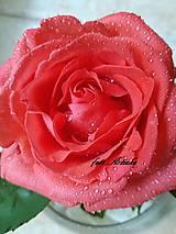 Fotografie - foto-kráľovná kvetov - 9562348_