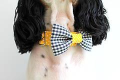 Pre zvieratká - Dvojfarebný obojok Alfonz - s motýlikom - 9567485_