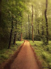 Fotografie - O ceste - 9577512_