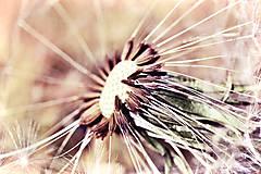 Fotografie - Púpavka - 9578790_