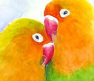Obrazy - Papagáje - akvarel - 9589732_