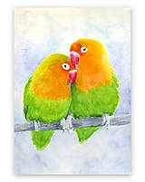 Obrazy - Papagáje - akvarel - 9589733_
