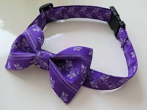 fialový motýlik pre psíka