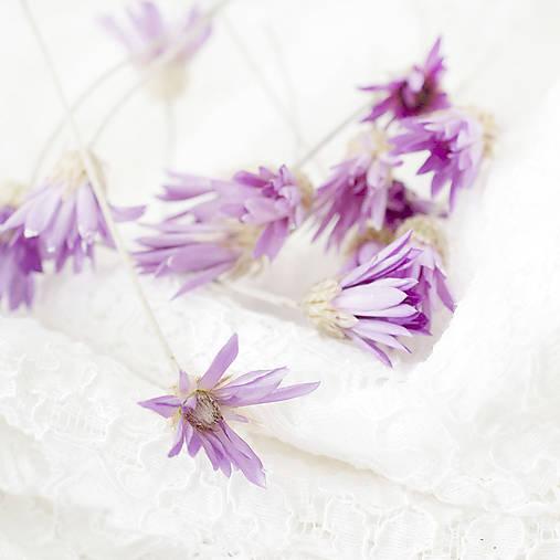 Sušené kvety Suchokvet fialový