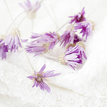 Suroviny - Sušené kvety Suchokvet fialový - 9597658_