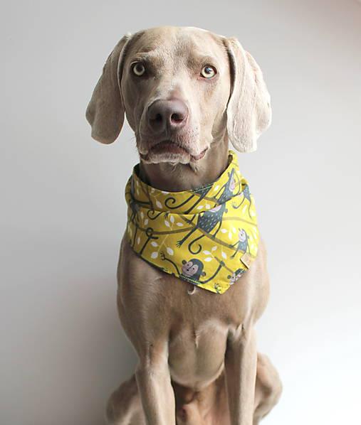 Frank - Obojstranná šatka pre psíkov