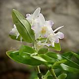 Fotografie - Orchideové leto - autorská fotografia - 9631036_