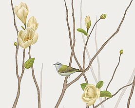 Grafika - TENNESSEE WARBLER ON TWIG WITH MAGNOLIA - 9646152_