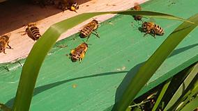 Potraviny - Včelí peľ - 9654222_
