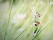 Fotografie - Včely a levanduľa - 9660648_