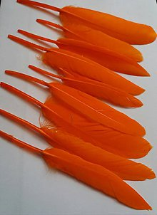 Suroviny - Kačacie perie  - oranžové -  10 ks - 9668216_