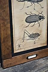 Tabuľky - Entomologické obrázky zo starého kabinetu - 9668605_