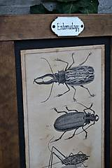 Tabuľky - Entomologické obrázky zo starého kabinetu - 9668606_