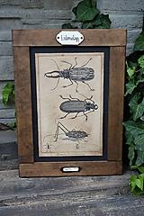 Tabuľky - Entomologické obrázky zo starého kabinetu - 9668607_