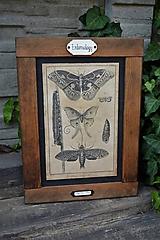 Tabuľky - Entomologické obrázky zo starého kabinetu - 9668612_