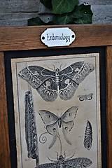 Tabuľky - Entomologické obrázky zo starého kabinetu - 9668613_