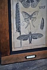 Tabuľky - Entomologické obrázky zo starého kabinetu - 9668615_